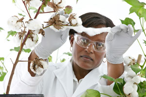 Bayer opens in Mozambique