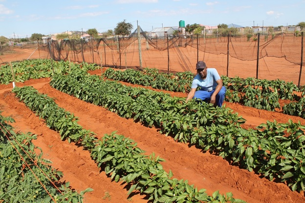 Retrenched Medupi Power Plant worker turns to agriculture